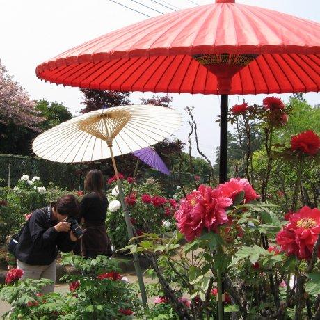 쓰누바에 있는 일본식 모란 정원