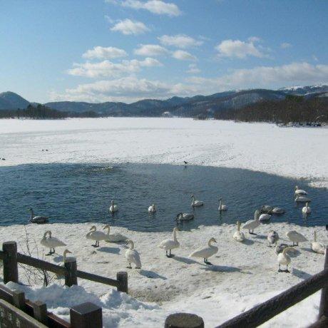 오누마 호의 겨울