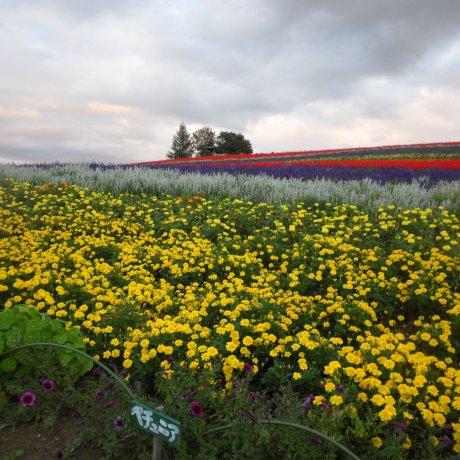 비에이의 꽃밭