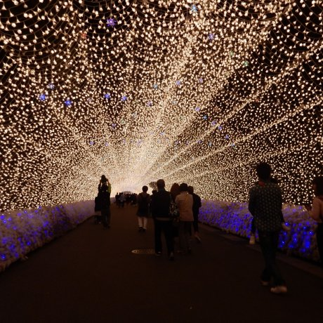 Nabana No Sato Spring Illumination