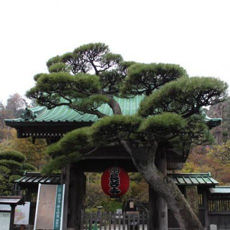 鎌倉(카마쿠라) 長谷寺(하세데라)